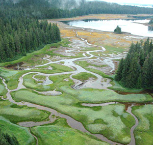 Salt marshes in Southeast Alaska. 