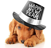 ive New Year Resolutions Every Pet Parent Should Make for 2016