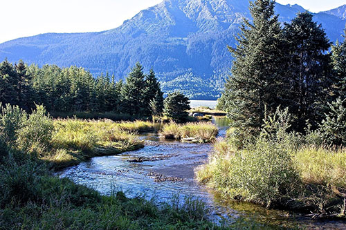 jpg The Tongass Rainforest is Alaska's First Line of Climate Change Defense