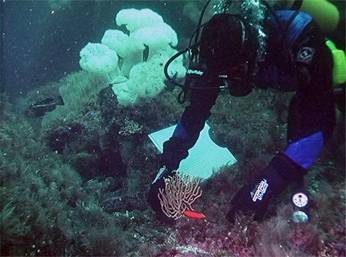 jpg Important fish habitat formed by slow-growing corals may recover more slowly in a changing climate