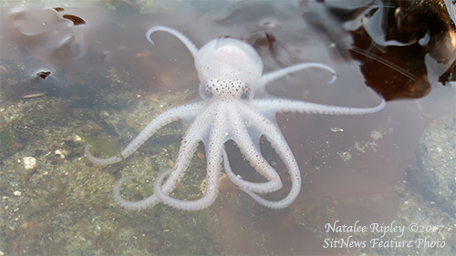 jpg January 2017 Photo of the Month 
