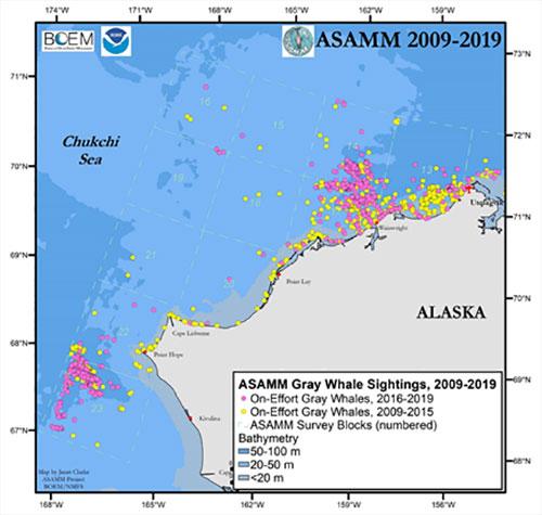 jpg Sightings of gray whales in the Chukchi Sea off the coast of Alaska
