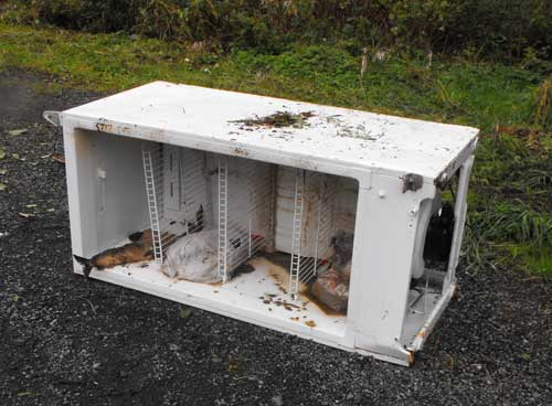 jpg A freezer with salmon dumped on N. Tongass for the  AK DOT Maintenance crew to clean up.