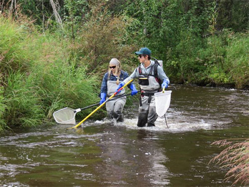 jpg Researchers study how wildfires affect fish habitats