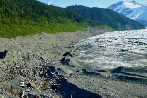 'Ghost forest' got run over by a glacier