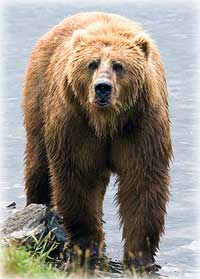 DNA Study Clarifies How Polar Bears & Brown Bears Are Related