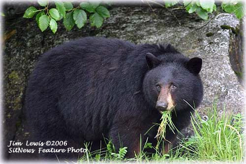 jpg Bear species' genetic relationships determined