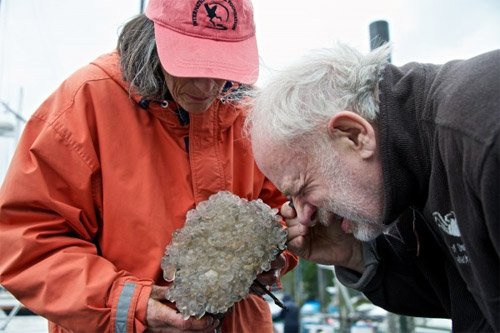jpg Marine invasive species get bioblitzed in Ketchikan