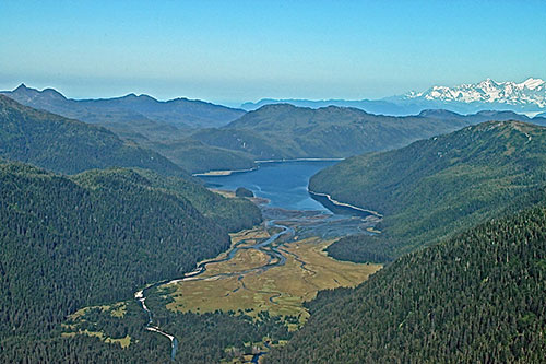 jpg Expansive old-growth rainforests on the Tongass may act as a climate refuge but only if protected from logging