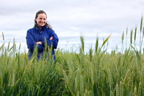 jpg Researcher seeks better wheat for Alaska farms