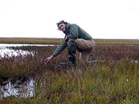 Ponds are disappearing in the Arctic