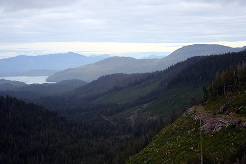 jpg Judge approves Big Thorne, the largest old growth timber sale in decades, and the Tongass Forest Plan