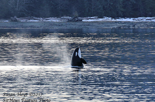 jpg March 2017 Photo of the Month