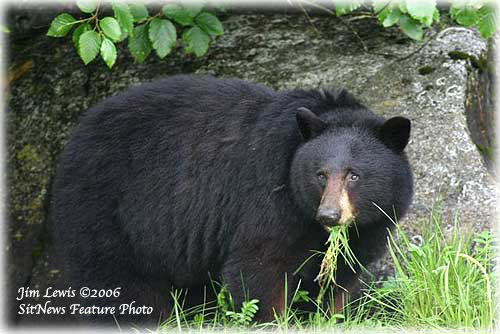 jpg Great scat! Bears - not birds - are the chief seed dispersers in Alaska