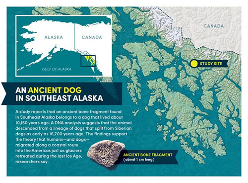 How did dogs get to the Americas? An ancient bone fragment found in Southeast Alaska holds clues