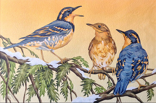 jpg Results for the 2015 Alaska Hummingbird Festival Juried Art Show
