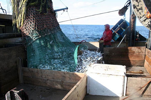 jpg U.S. fisheries continue to rebuild; overfishing and overfished numbers at all-time lows