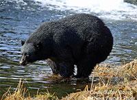 Warm Days, Stirring Bruins Remind Alaskans to be Bear Aware