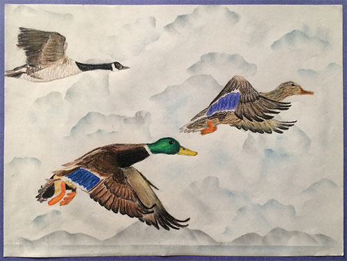jgp Best of Show: 