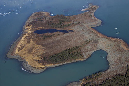 jpg Spruce trees shaved off a peninsula within Taan Fiord by a landslide-generated wave October 2015.