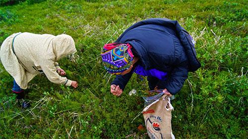 jpg Ties to Alaska's wild plants