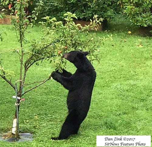 jpg Spring is Here, Be Bear Aware