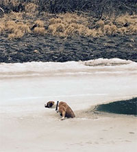 Dog saved from watery demise