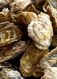 Shellfish workshops offered in Ketchikan and Homer