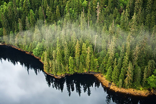 jpg Tongass Advisory Committee Releases Recommendations for Forest Management on the Tongass