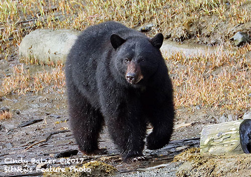 jpg May 2017 Photo of the Month