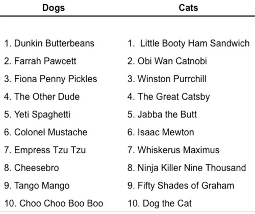 Below are the 10 Wackiest Dog and Cat Names of 2017: