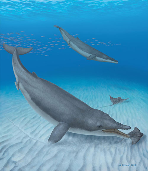 jpg Baleen whales' ancestors were toothy suction feeders
