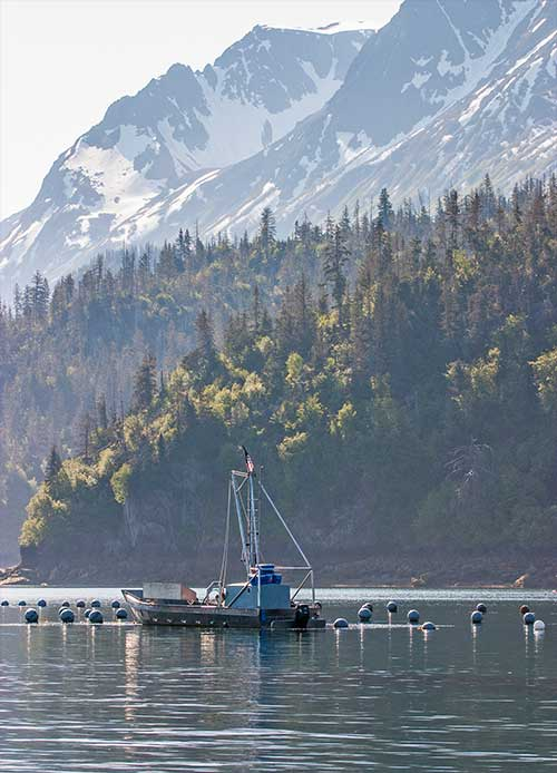 jpg A boat works at an oyster farm in Kachemak Bay.