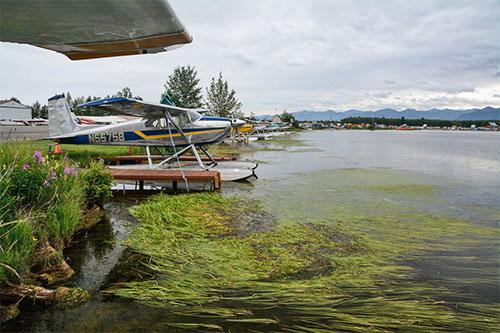 jpg Floatplanes sit in elodea-infested waters in Lake Hood (Anchorage)