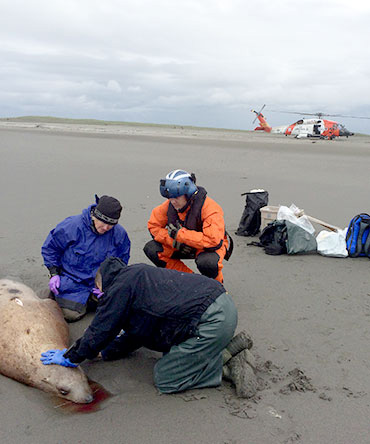 jpg REWARD INCREASES TO $7,500 FOR INFORMATION ON STELLER SEA LIONS KILLED NEAR CORDOVA