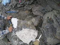 First elasmosaur specimen excavated in Alaska