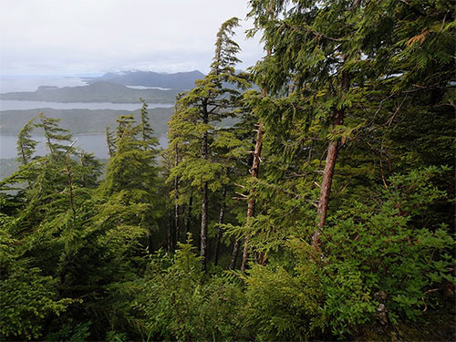 jpg One small view of the Tongass National Forest. At almost 17 million acres, the Tongass National Forest is the largest National Forest in the United States.