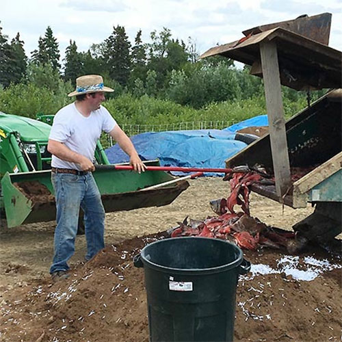 jpg Fish Waste Composting Offers Alternative to Landfill Disposal