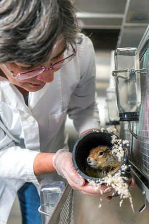 jpg Alaska researchers will apply hibernation insights to human health