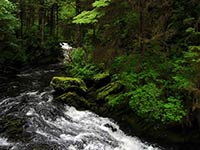 Court to Reconsider Decision on Roadless Areas of Tongass National Forest