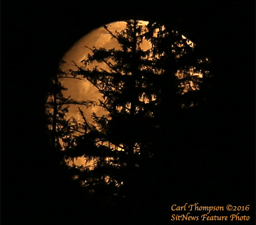 jpg August 2016 Photo of the Month