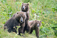 Final Rule: Predator Control Restricted on Alaska National Wildlife Refuges