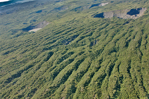 jpg Forests growing on both Bering and Malaspina Glaciers in southern Alaska.