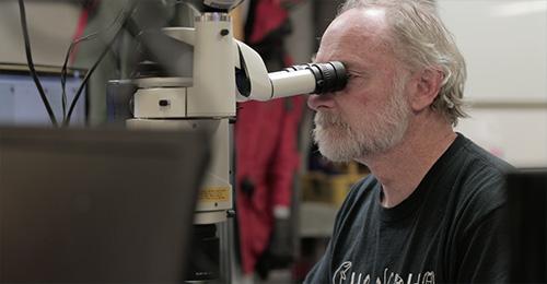 jpg Russ Hopcroft identifies copepods through a microscope on the NGA LTER cruise