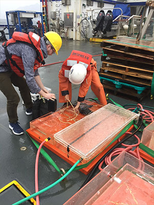 jpg Clay Mazur and Hana Busse help set up the incubation experiment on Sikuliaq's deck.