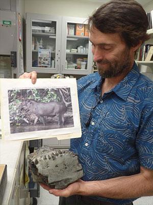 jpg Tapir's jaw an 'incredibly rare' find