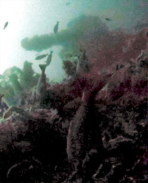 jpg Stern of World War II U.S. destroyer discovered off remote Alaskan island