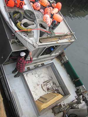 jpg Study investigates shortcoming of ITQ systems for fisheries