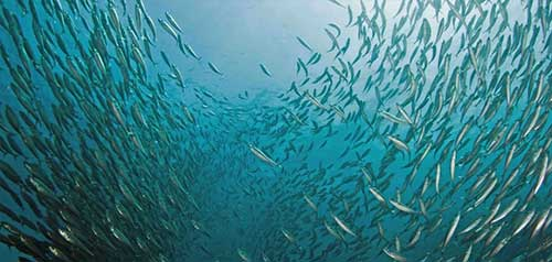 jpg Number of U.S. fish stocks at sustainable levels remains near record high