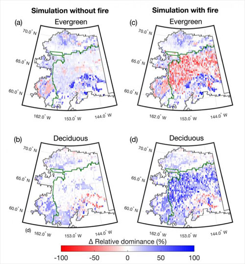 jpg Deciduous broadleaf trees increase and evergreen conifer trees decrease in interior Alaska between now and 2100 because of warming and wildfire in the boreal forest.